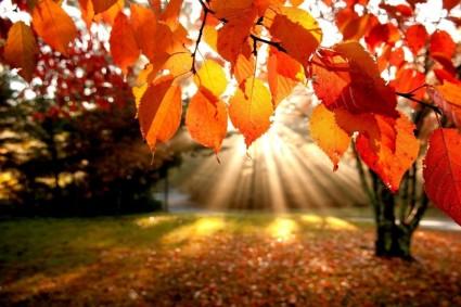 automne-4-1050x700